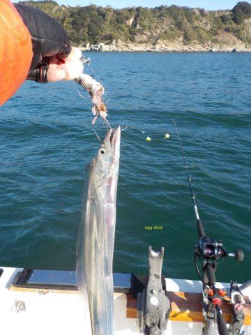 釣れた時のタチウオは輝く刀ようだ