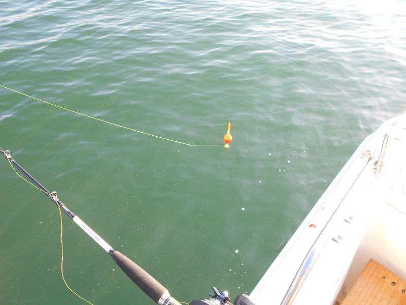 ボート横からアジをウキで泳がせる
