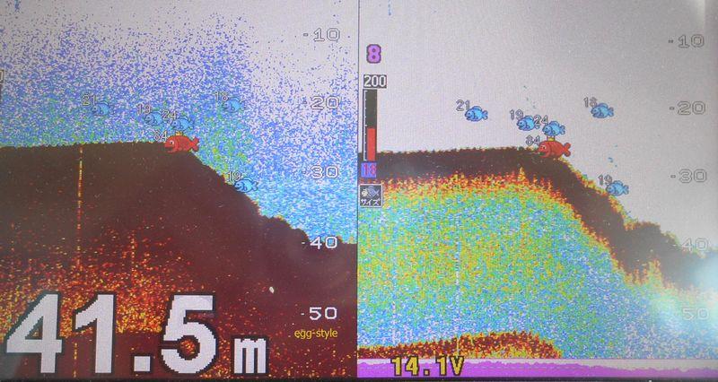 魚探反応40m水深にブリ