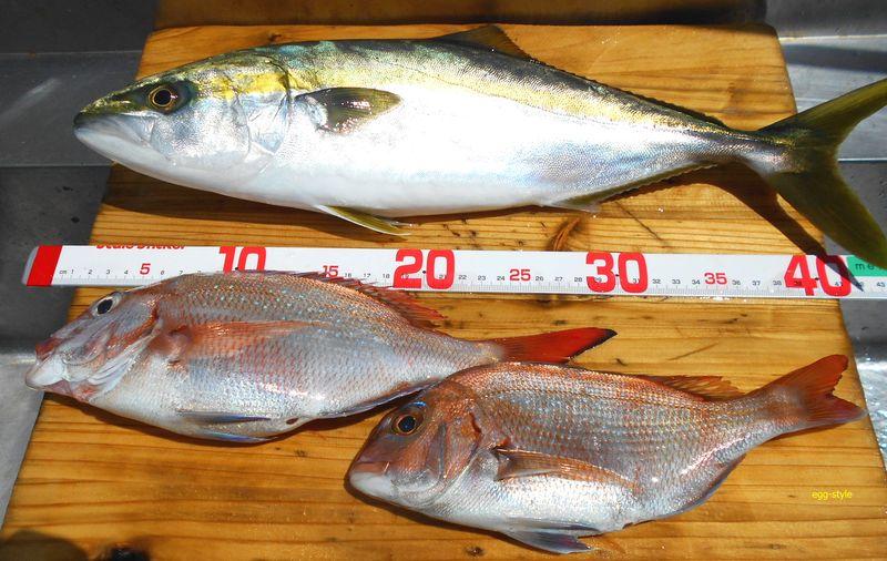 釣果はきれいな魚たち、調査釣行がうまくいきました