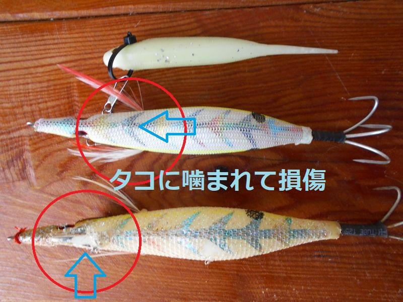 興味深い白色のタコエギの噛まれた跡