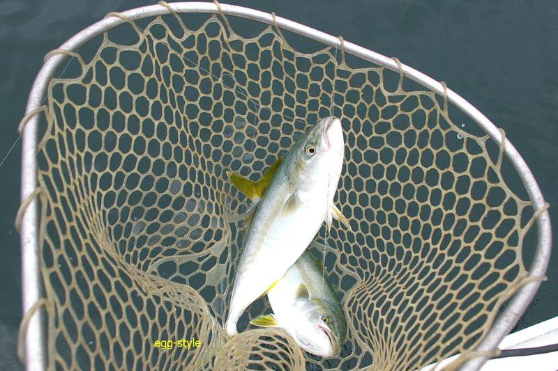 ハマチのチョクリ釣りは違った趣き