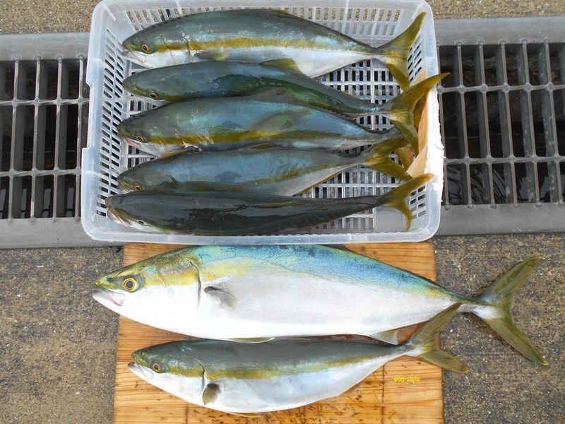 本日の釣果7匹、これでしばらく食べれ、また釣ります