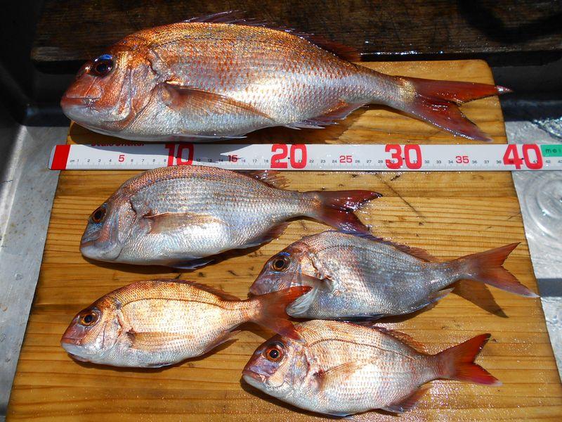 出世魚は、成長過程でで呼び名がサイズで変わる