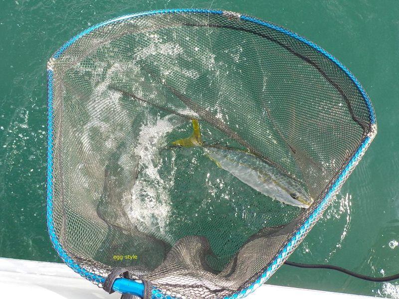魚に対してで大きすぎの玉網だけど、至福の瞬間