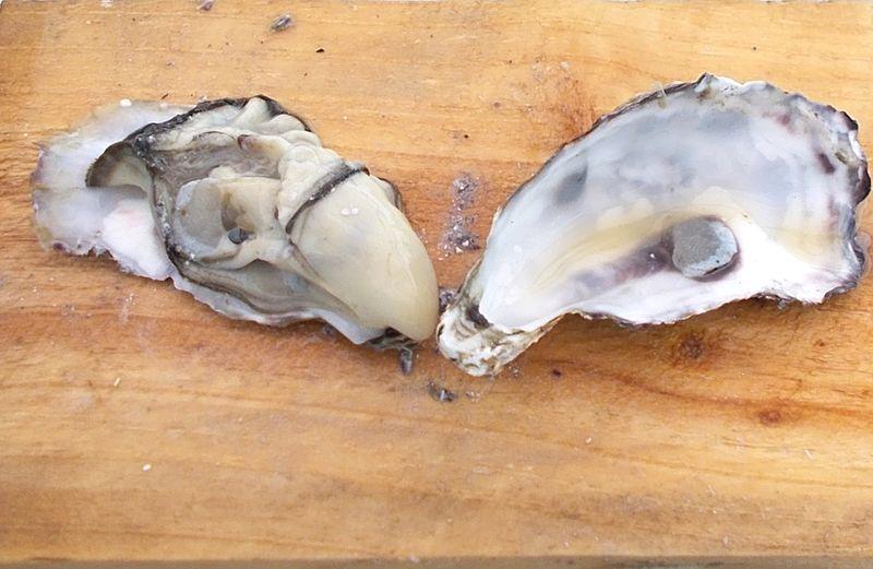 初めて牡蠣の殻むき。80個必死にむいて、ソテーにフライに食べるシーズンオフの楽しみ