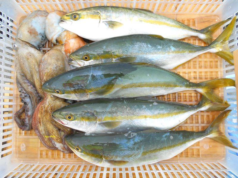 マダコ釣って、ツバス釣って、夏の釣りの楽しさ