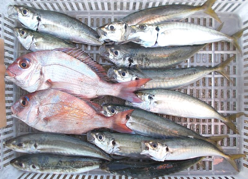 尺サイズだと見事だけど、嬉しい釣果で本日の肴です