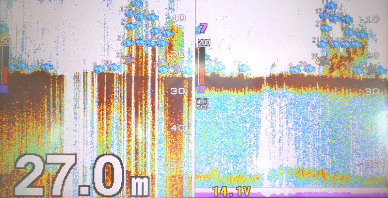 昨年の沖の石 イワシの反応の周囲にはツバスやハマチ。今年はこれが見えにくい